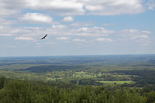 View from Carter Mountain, with bird