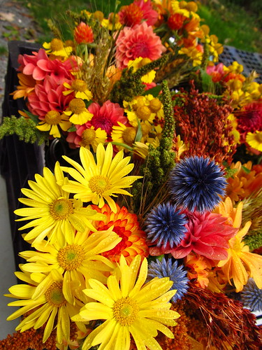 orange yellow blue bouquets by Shady Grove Gardens