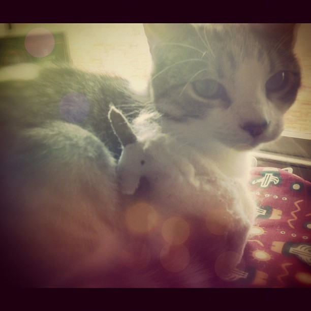 The cat and the unicorn #love #snuggling #kitten