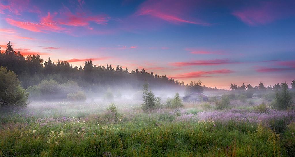 Fog before sunrise