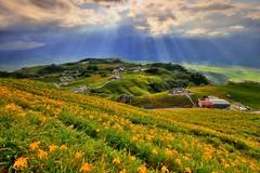 六十石山~金針花