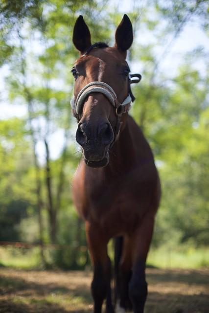 My horse Megan