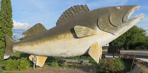 minnesota mn lakeofthewoodscounty baudette worldslargestthings roadsideamerica fish northamerica unitedstates us