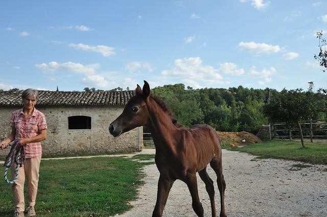 Arabian horse!