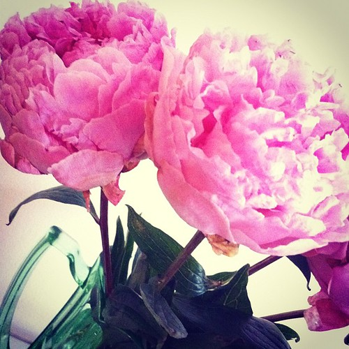 Ali bought me peonies