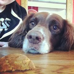 Ermagahhhd biscuuuuts