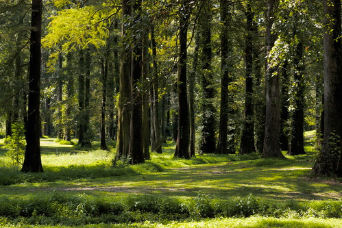 trees green nature grass forest outside outdoors woods lush