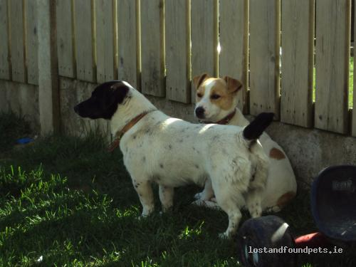 Wed, Sep 12th, 2012 Lost Male Dog - Ballybrittan, Rhode / Edenderry, Offaly