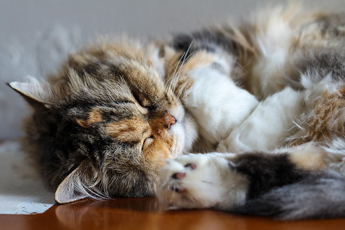 Cat nap in morning light