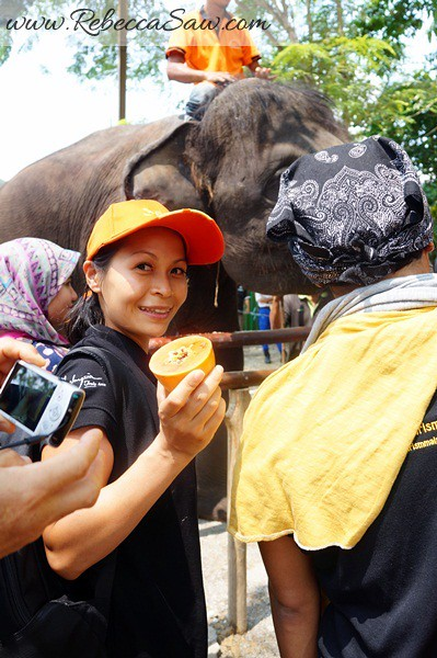 Malaysia Tourism Hunt 2012 - National Elephant Conservation Centre