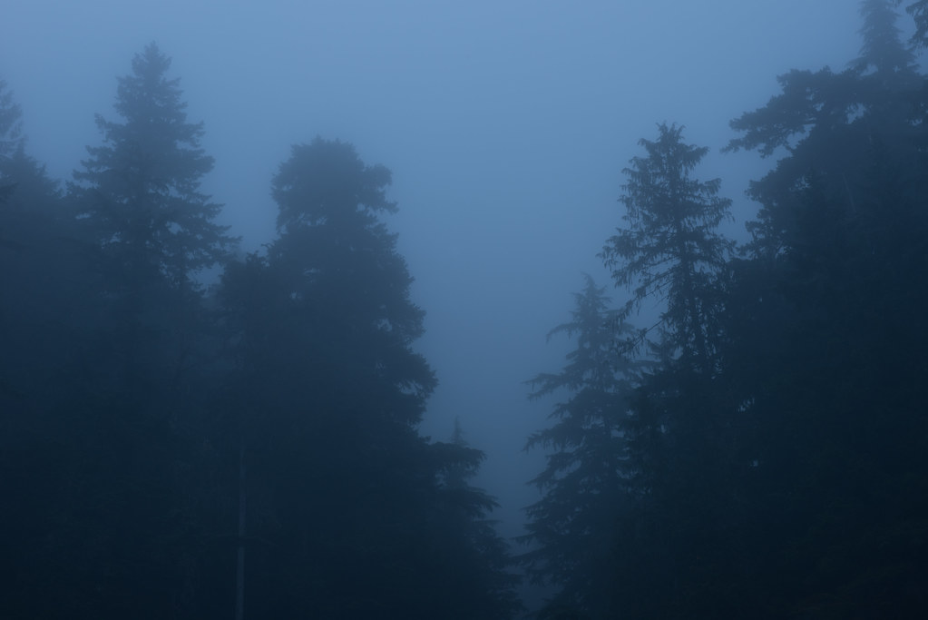 Pre-dawn fog, Mount Rainier National Park