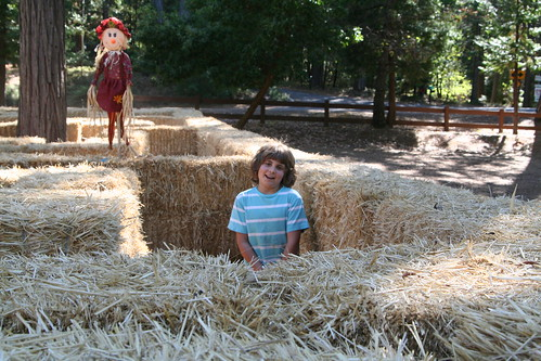 Lucas, a Little Tall for the Hay Maze