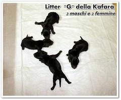 litter_G-01