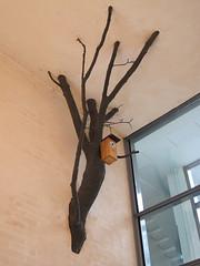 Kotipuu (home tree)