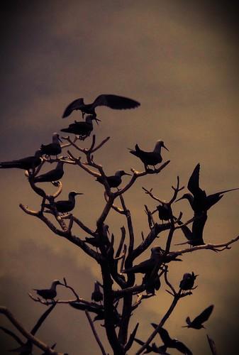 sky tree birds pacific silouette solomonislands mygearandme