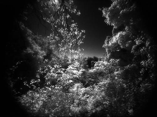 wood blackandwhite sun tree 35mmfilm infrared analogue stalbans nikonf80 tokina1224mmf4 ddx ilfotecddx albanway homeprocessed efkeir820aura bwfp