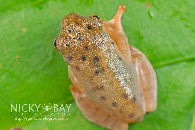 Frog (Anura) - DSC_8965