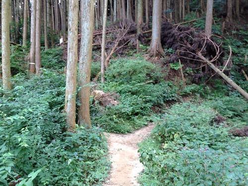 金剛山登山(高天彦神社から)-13