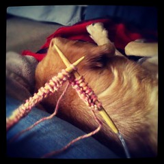 Sophie & I, watching #pats & #knitting xmas gifts. #hound #mutt #dogs #paw #dogstagram #rescue #knit #yarn #patsnation #adoptdontshop #lazy #football #sunday #happy