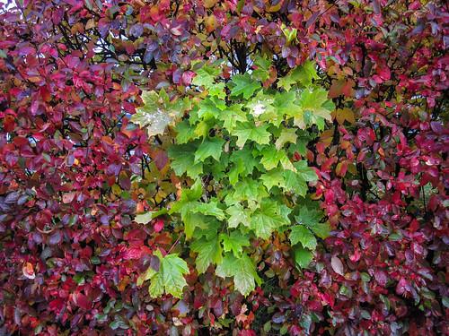 Autumn colour spot