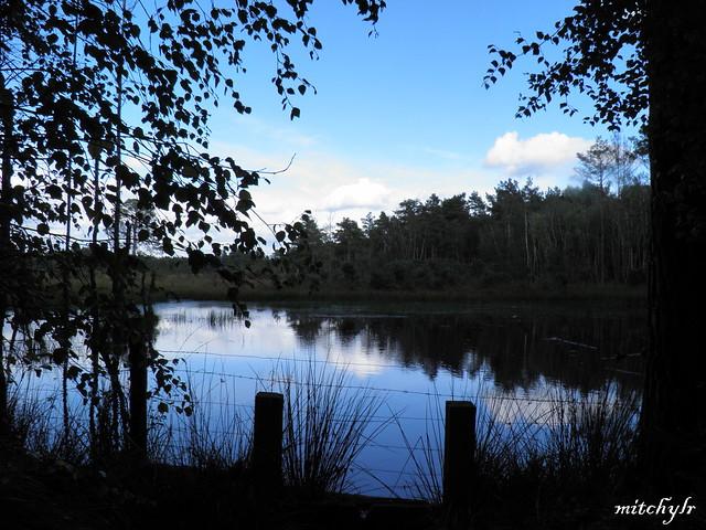 Lake Blues 1
