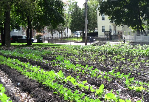 Tucker St Urban Farm, managed by ReVision (c2012 FK Benfield)