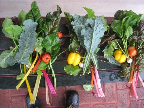 Children's Garden Harvest