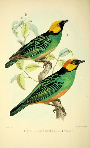 n215_w1150 by BioDivLibrary