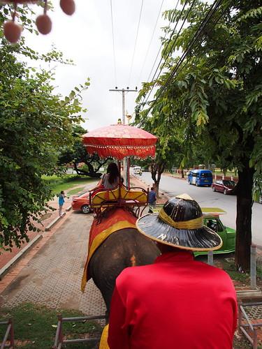 Ayutthaya - ゾウ