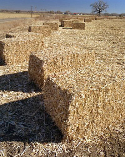 Corn stover, baled, large square