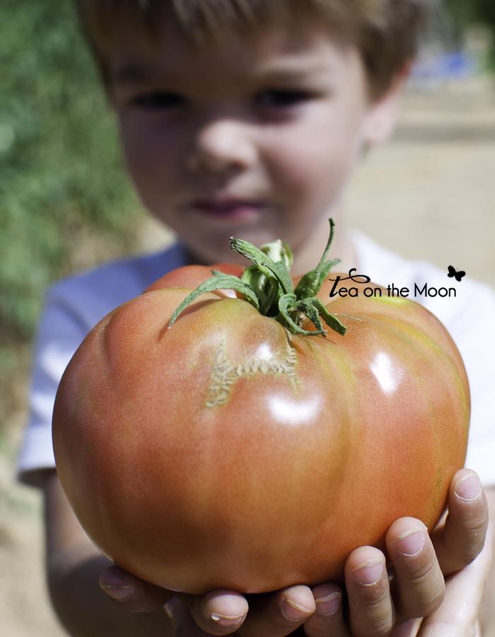 Huerto niños tomates 4