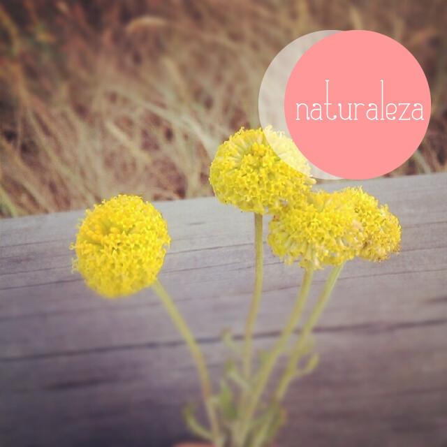 Flores silvestres.fw