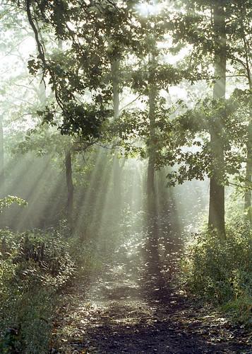 [フリー画像素材] 自然風景, 森林, 薄明光線 ID:201209241200