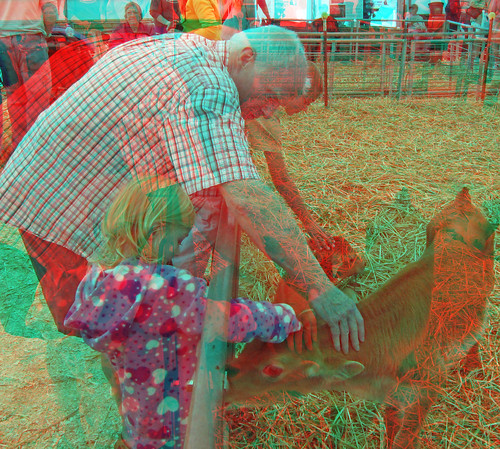 stereoscopic stereophoto 3d anaglyph iowa stereo spencer calves redcyan 3dimages 3dphoto 3dphotos 3dpictures stereopicture 2012claycountyfair