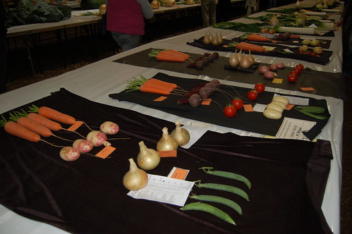 North East Horticultural Society Championship Show (9)