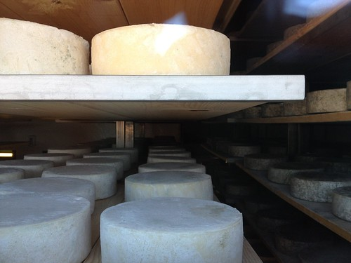 Goat cheese farm - Pennyroyal