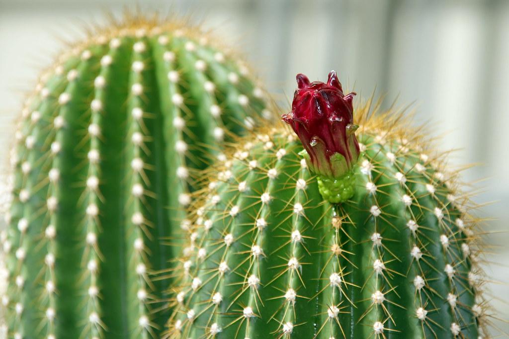 botánico de madrid en septiembre