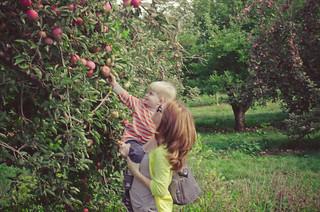 Apples-0165