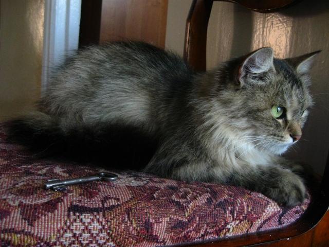 Кошка Дашка - администратор гостиницы