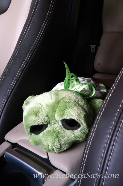 tg jara Turtle