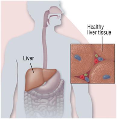Causes of Hepatitis