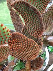 Unique Cactus - 2