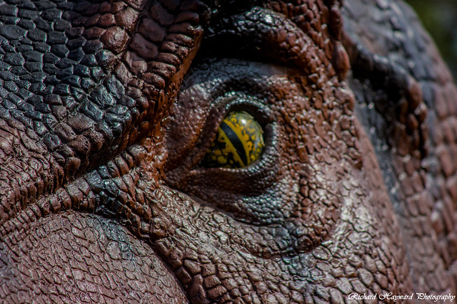 Dino Eye Closeup WIP by justsantiago Images - Frompo