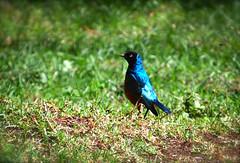 2012 Kenya Outing (1 of 79)