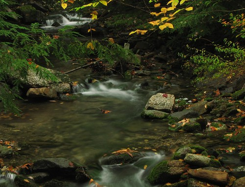fall water leaves wolfcreek schuylkillcounty ourdailychallenge tp329