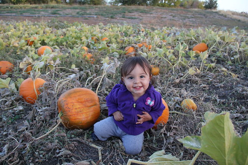 Jovie baby girl in the pumpkins 1