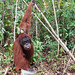 Orangutan World, Tanjung Puting Borneo Adventure-101.jpg