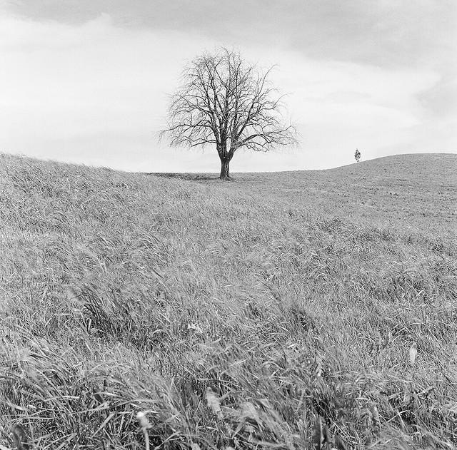 Schönenberg - Ilford HP5+ 120 film