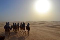 Caravan in the Sahara Desert (Tunisia)