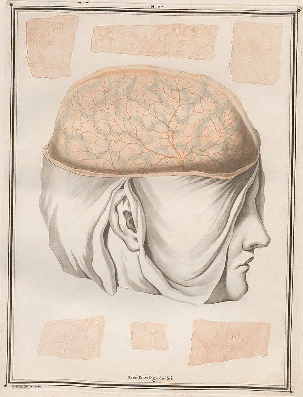 engraved, hand-coloured book illustration of brain section